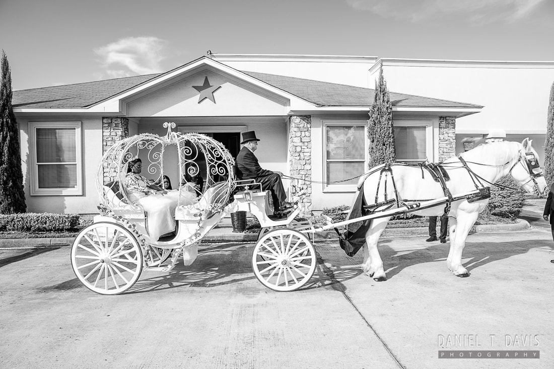 Horse Wedding Rental Houston